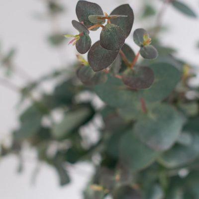 Artificial Australian Native Flowers Order Online Secret Blooms Matilda Bouquet