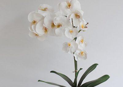 rebecca-artificial-orchid-portrait