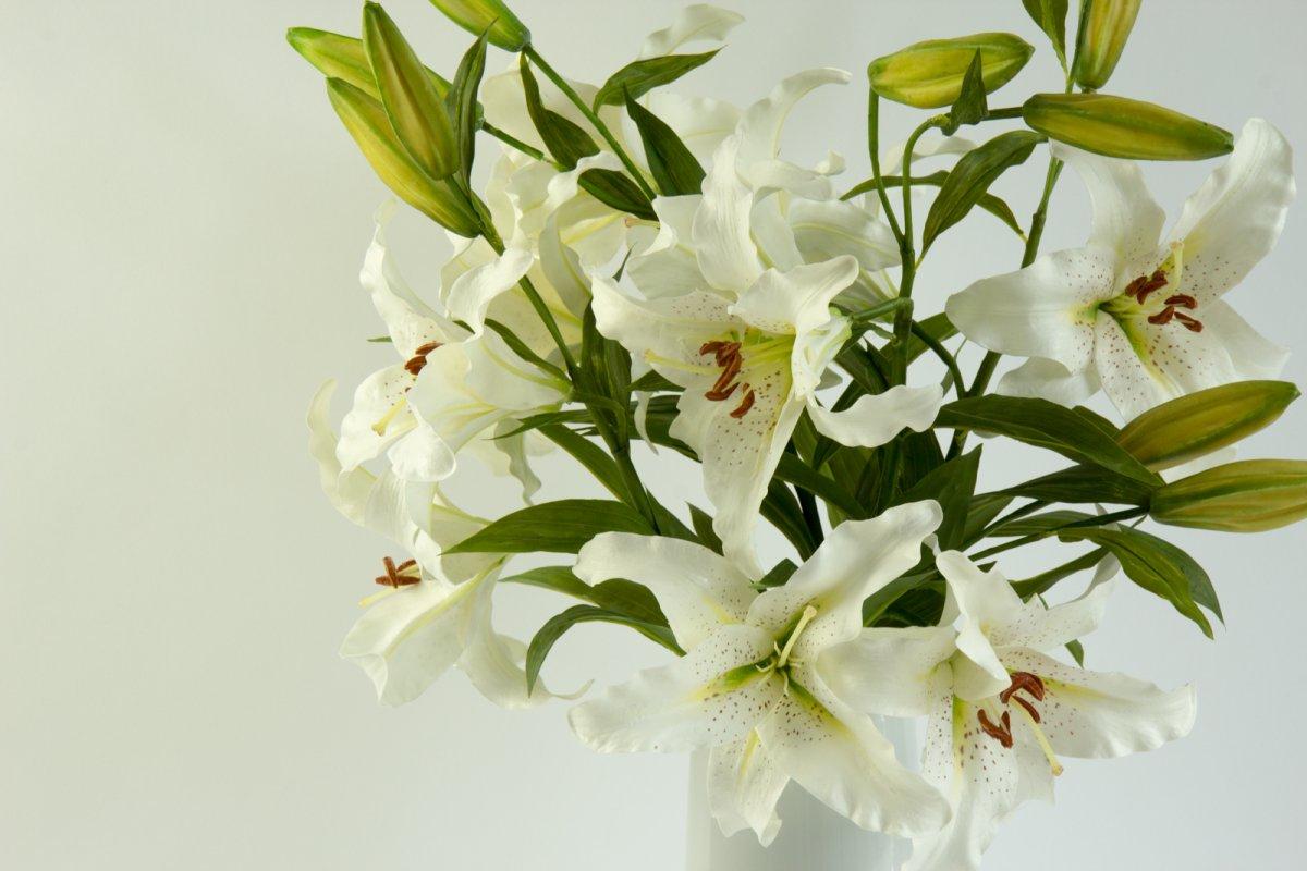 Melanie white vase secret blooms melanie white vase izmirmasajfo