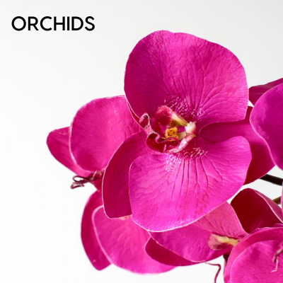 Artificial Orchids