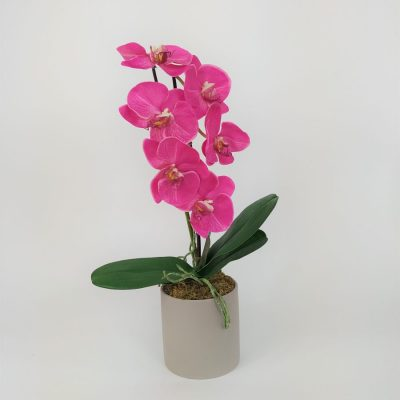 Secret Blooms Rachel Fuschia Phalaenopsis Orchid Light Grey Pot