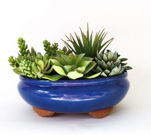 Secret_Blooms_Freddie_Realistic_Succulent_Garden