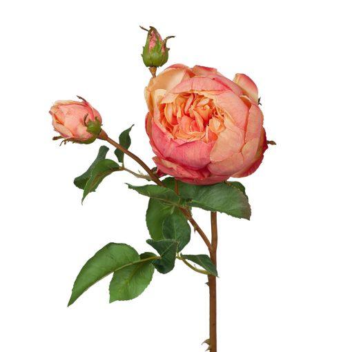 Secret_Blooms_Cabbage_Rose_Burnt_Orange