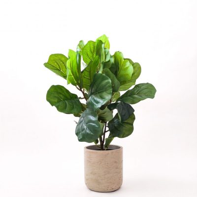 Secret-Blooms-Artificial-Fiddle-Leaf-Plant