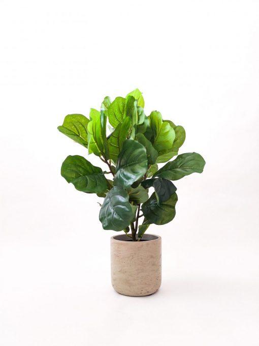 Secret-Blooms-Artificial-Fiddle-Leaf-Plant