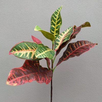 Secret_Blooms_Artificial_Croton_Leaf_Stem