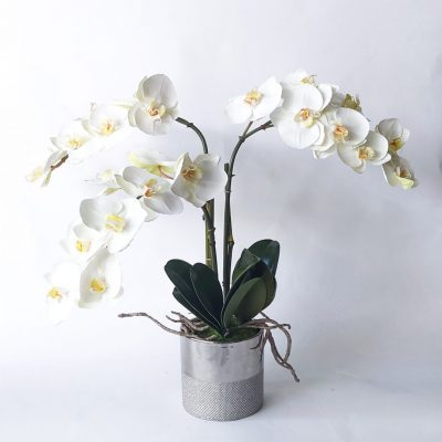 Secret_Blooms_Artificial_Phalaenopsis_Orchid