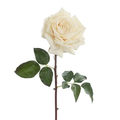 real touch rose ivory artificial stem
