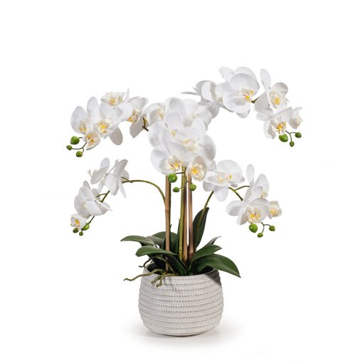 real touch white Phalaenopsis Orchid