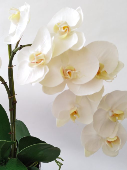 Real-touch-Phalaenopsis-Orchid