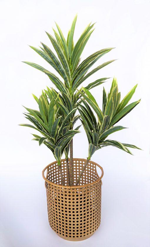 cordyline-variegated-baha-weave-pot