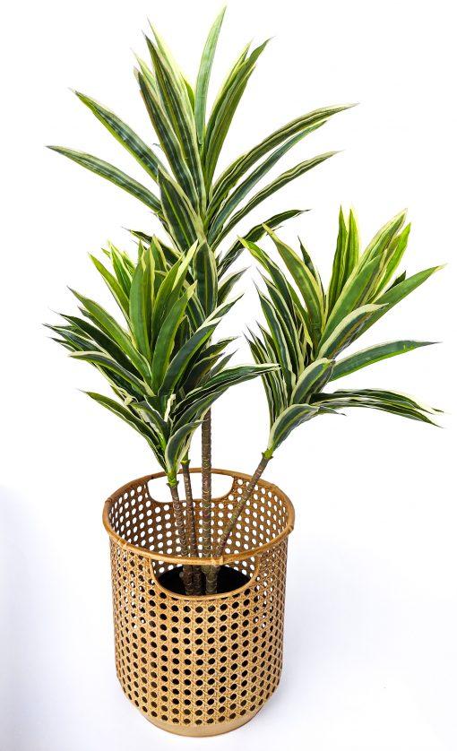 variegated-cordyline-baha-weave-pot