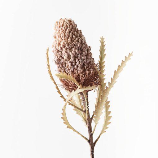Dried-Look-Banksia_Acorn