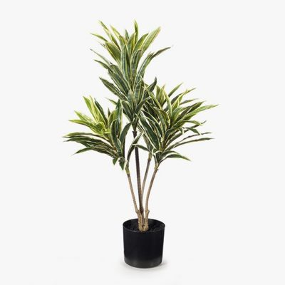 Artificial-real-touch-Cordyline-plant