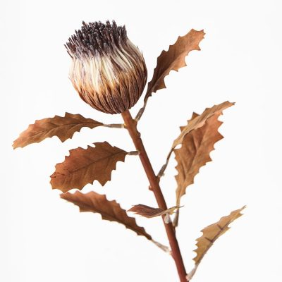 artificial-dried-look-protea-bud-stem