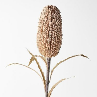 Dried-Look-Artificial-Banksia-Sawtooth