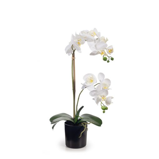 Faux-real-touch-Phalaenopsis-Plant