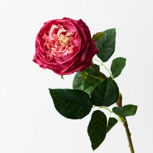 Rose-Austin-Real-touch-stem